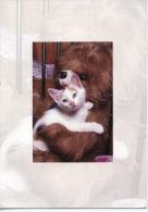 Chaton Et Nounours Peluche (ours Ourson Chat) Images Buissonnières (neuve) - Katzen