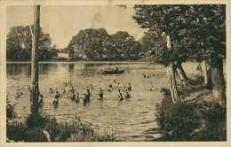 35 PIRE SUR SEICHE / Ecole Des Missions Coloniales, Les Enfants Au Bain Dans Le Lac De L'Ecole / - Frankreich