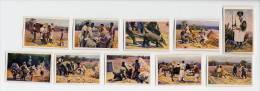 Hagenbeck (1929) - Erdferkelfang In Der Abessinischen Steppe. Aardvark (full Serie Of 10 Pictures) - Otras Marcas