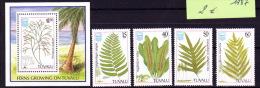 Cryptogamen - Sporenplanten Varens - Tuvalu - Végétaux