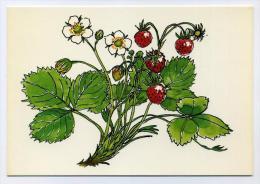Fraises, Strawberries - Drawing By Marguerite Walfridson - Scandecor 7896 - Fleurs, Plantes & Arbres