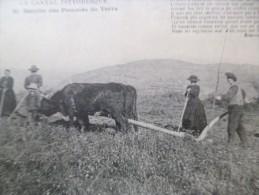 CPA Le Cantal Pittoresque Récolte De La Pomme De Terre Thème Agriculture - Non Classés