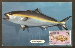 BARBUDA Carte Maximum - Grande Sériole - Antigua Und Barbuda (1981-...)