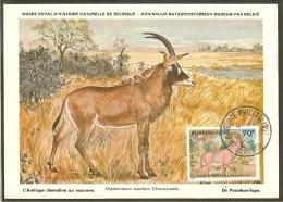 BURKINA FASO Carte Maximum - Hippotrague - Burkina Faso (1984-...)