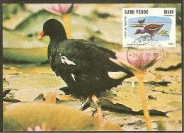 CAP VERT Carte Maximum - Gallinula Chloropus - Cape Verde