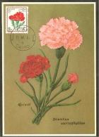 EGYPTE Carte Maximum - Fleur D'Oeillet - Égypte