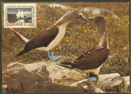 EQUATEUR Carte Maximum - Albatros à Masque - Equateur