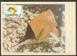 CHRISTMAS Carte Maximum - Forcipiger Longirostris - Christmas Island
