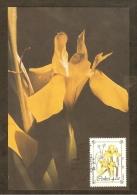 AFRIQUE SUD CISKEI Carte Maximum - Moraea Reticulata - Ciskei