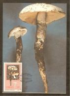 AFRIQUE SUD CISKEI Carte Maximum - Termitomyces Sp. - Ciskei