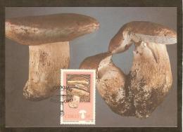 AFRIQUE SUD CISKEI Carte Maximum - Boletus Edulis - Ciskei