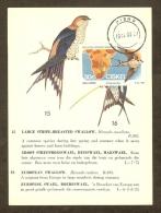AFRIQUE SUD CISKEI Carte Maximum - Hirundo Cucullata - Ciskei