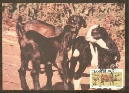 AFRIQUE SUD TRANSKEI Carte Maximum - Chèvres - Transkei