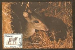 AFRIQUE SUD TRANSKEI Carte Maximum - Philantomba Monticola - Transkei