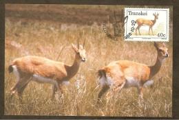 AFRIQUE SUD TRANSKEI Carte Maximum - Ourebia Ourebi - Transkei