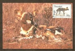 AFRIQUE SUD TRANSKEI Carte Maximum - Lycaon Pictus - Transkei