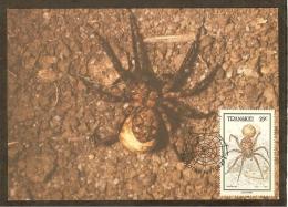 AFRIQUE SUD TRANSKEI Carte Maximum - Lycosidae - Transkei