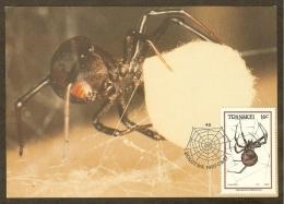AFRIQUE SUD TRANSKEI Carte Maximum - Latrodectus Indistinctu - Transkei