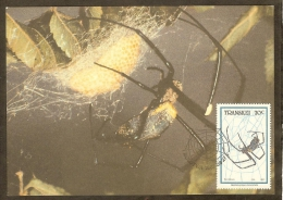 AFRIQUE SUD TRANSKEI Carte Maximum - Nephila - Transkei