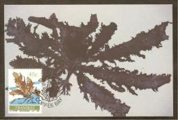 AFRIQUE SUD TRANSKEI Carte Maximum - Ecklonia Biruncinata - Transkei