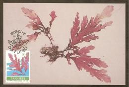 AFRIQUE SUD TRANSKEI Carte Maximum - Plocamium Corallorhiza - Transkei