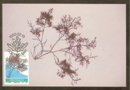 AFRIQUE SUD TRANSKEI Carte Maximum - Gelidium Amanzii - Transkei