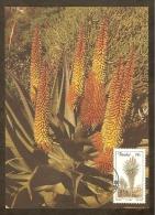 AFRIQUE SUD TRANSKEI Carte Maximum - Aloe Ferox - Transkei