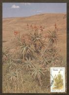 AFRIQUE SUD TRANSKEI Carte Maximum - Aloe Arborescens - Transkei