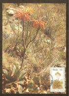 AFRIQUE SUD TRANSKEI Carte Maximum - Aloe Maculata - Transkei