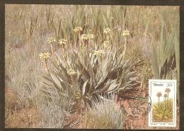 AFRIQUE SUD TRANSKEI Carte Maximum - Aloe Ecklonis - Transkei