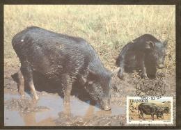 AFRIQUE SUD TRANSKEI Carte Maximum - Porcs Noirs - Transkei