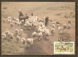 AFRIQUE SUD TRANSKEI Carte Maximum - Moutons - Transkei