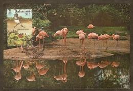 BAHAMAS Carte Maximum - Megaceryle Alcyon - Bahamas (1973-...)