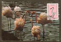 BAHAMAS Carte Maximum - Flamant Rose - Bahamas (1973-...)