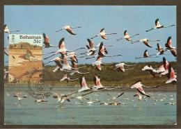 BAHAMAS Carte Maximum - Urbanus Proteus - Bahamas (1973-...)