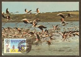 BAHAMAS Carte Maximum - Flamant - Bahamas (1973-...)