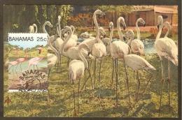 BAHAMAS Carte Maximum - Flamants Roses - Bahamas (1973-...)