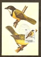 AITUTAKI Carte Maximum - Siffleur Dor - Aitutaki