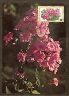 ALLEMAGNE FEDERALE Carte Maximum - Bouquet De Phlox - Maximumkarten (MC)