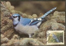 CANADA Carte Maximum - Geai Bleu - Maximumkaarten