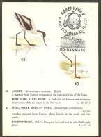 DANEMARK Carte Maximum - Avocette - Cartoline Maximum