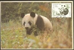 CHINE Carte Maximum - Pandas - 1949 - ... République Populaire
