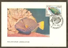 BELGIQUE Carte Maximum - Balistapus Undulatus - Other