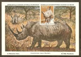 BELGIQUE Carte Maximum - Rhinocéros Blanc - Other