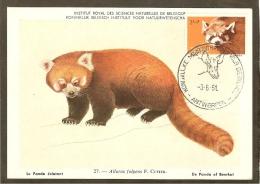 BELGIQUE Carte Maximum - Panda - Other