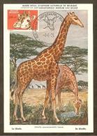 BELGIQUE Carte Maximum - Girafe - Other