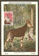 BELGIQUE Carte Maximum - Okapi - Other