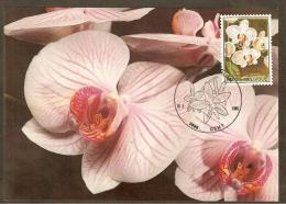 BELGIQUE Carte Maximum - Phalaenopsis - Other