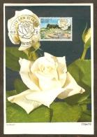 BELGIQUE Carte Maximum - Rose Pascali - Other