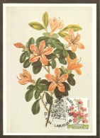 BELGIQUE Carte Maximum - Azalea Japonica - Other